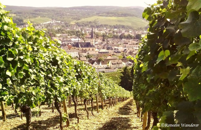 Holiday in Vineyards – Ahr, Germany
